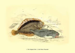 Tadpole Fish  - Salt Water Flounder